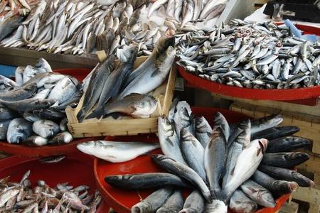 fischerei: Frischer Fisch auf dem Markt