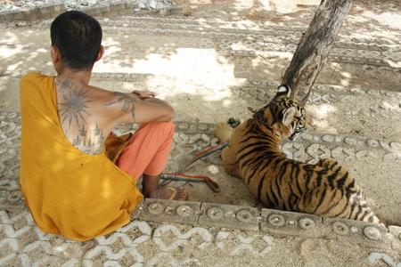 tigresa: El monje budista y el Tigre en un Templo del Tigre, provincia de Kanchanaburi, Tailandia