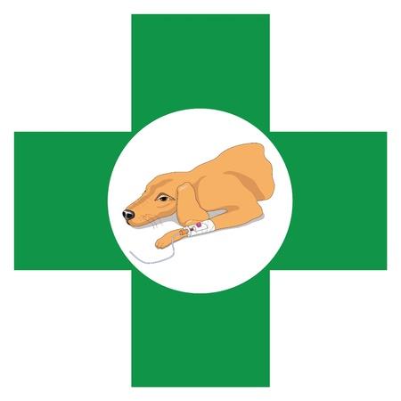 animal practice: Cruz con la imagen de Veterinaria de la recuperaci�n de perro