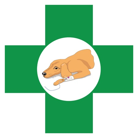 catheter: Veterinary cross  with image of recovering dog Illustration