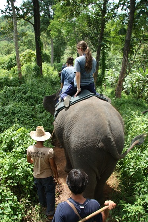 exotics: Elephant riding in the jungle, Chiang Mai, Thailand - 27.07.2011 Editorial