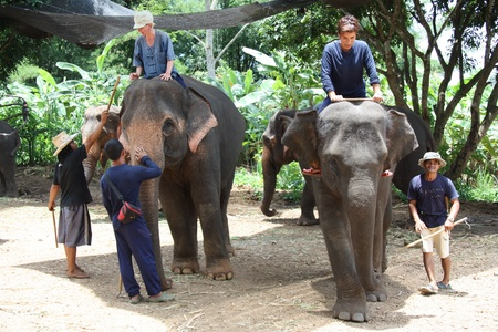 Elephant training and riding in the jungle, Chiang Mai, Thailand - 27.07.2011