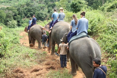 Elephant riding in the jungle, Chiang Mai, Thailand - 27.07.2011 Editorial