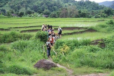 Tourists walking at the rice fields in Thailand - 31.07.2011