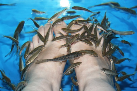 Fish Spa Stock Photo