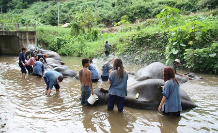 Happy tourists bathing elephants in river, Chiang Mai, Thailand - 27.07.2011