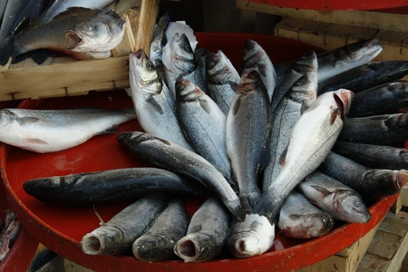 Fresh fish at the market photo