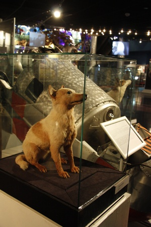 astronautics: The First space dog Belka in the Museum of Astronautics, Moscow, Russia