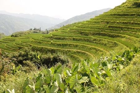 Rice Paddy Terraces, Pinjan, China, Asia Stock Photo - 13384645