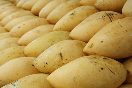 Mangoes Stock Photo - 14219305