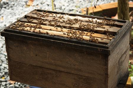 Natural wood bee box photo