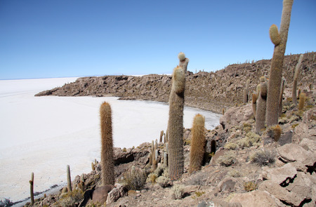 incahuasi: Island with Cactuses in a salt desert of Salar de Uyuni, Bolivia, South America Stock Photo