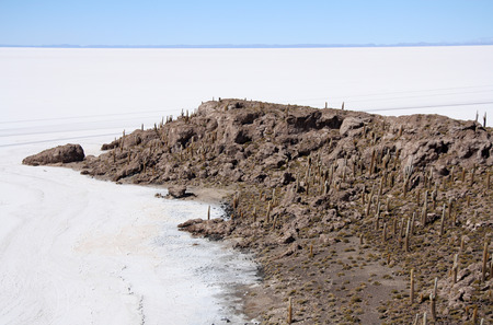 incahuasi: Island with Cactuses in a salt desert of Salar de Uyuni, Bolivia