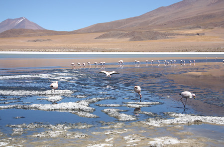 salar de uyuni: Mountain lake with flamingos in Salar de Uyuni, Bolivia Stock Photo