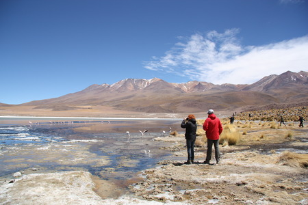 birds desert: Tourists in the lagoon with flamingos in Salar de Uyuni, Bolivia - 18.09.2013