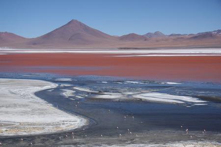 sulphuric acid: The amazing Laguna Colorada with flamingos feeding in Bolivia South America Stock Photo