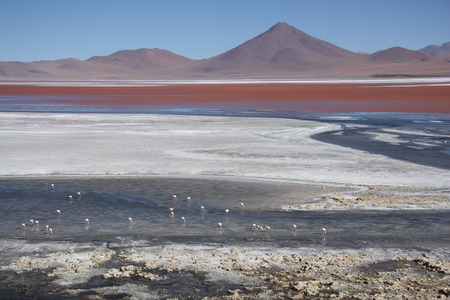 sulphuric acid: Laguna Colorada in Salar de Uyuni in Bolivia South America