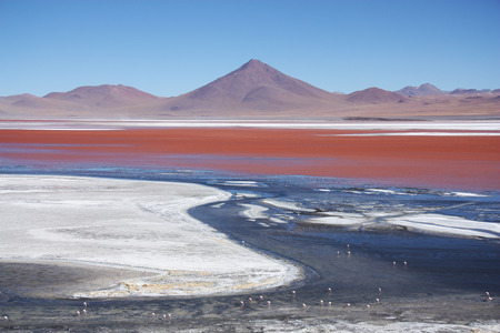 Beautiful Laguna Colorada with flamingos and volcano in Bolivia, South America