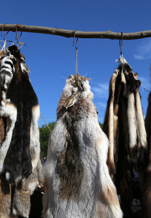 pelt: Lapin, mink and raccoon tanned furs and skins hanging