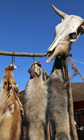pelt: Wild animal tanned furs and a skull in a hunting settlement
