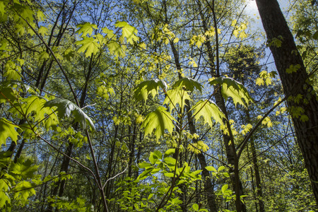 Young growing little trees in sunny spring forest