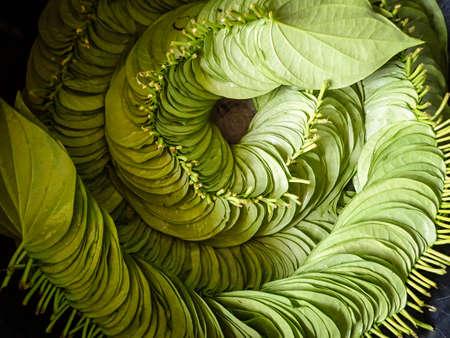 betel: Betel leafs Stock Photo