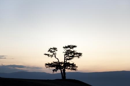 shamanic tree in the lake baikal Stock Photo - 16163391