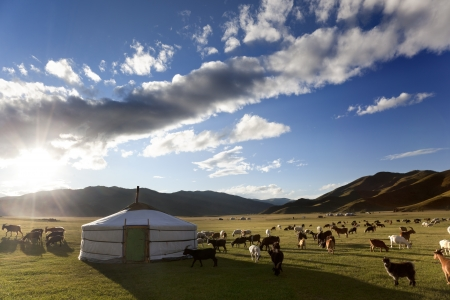 The sun rises in the Orkhon Valley while lambs graze freely Stock Photo