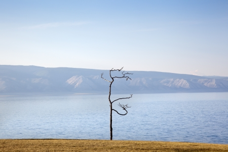 Shamanic Tree on Lake Baikal photo