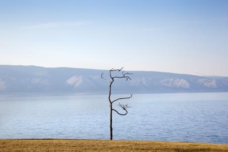 shamanic: Shamanic Tree on Lake Baikal Stock Photo