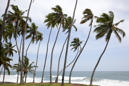 varkala: andscape with palm trunks bent on the coast of Varkala Stock Photo