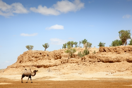 a camel walking through the desert