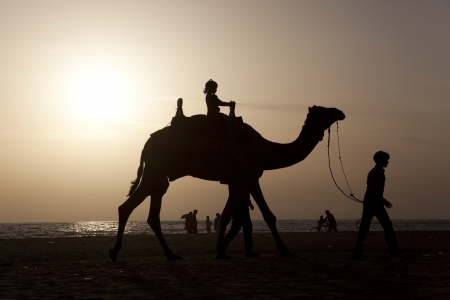 A girl riding a camel at sunset photo