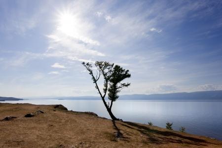 Backlight of a shamanic tree with the bottom of Lake Baikal photo