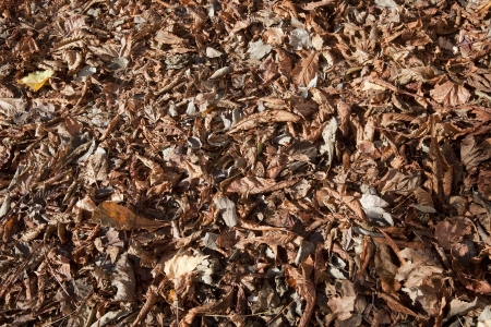 pile of dried leaves photo