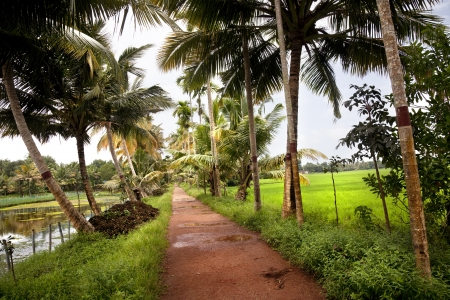 alappuzha: sand road with plam trees