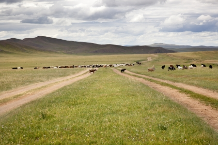a herd of goats with their shepherd on horseback, crossing a road in the Gobi Desert Stock Photo - 17589582