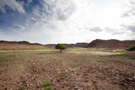 Gobi Desert landscape in Mongolia. grim picture photo
