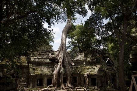 Temples of Angkor  Ta Prohm Stock Photo - 18424858