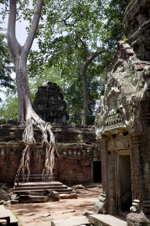 Temples of Angkor  Ta Prohm Stock Photo - 18424849
