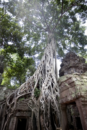 Temples of Angkor  Ta Prohm Stock Photo - 18424879