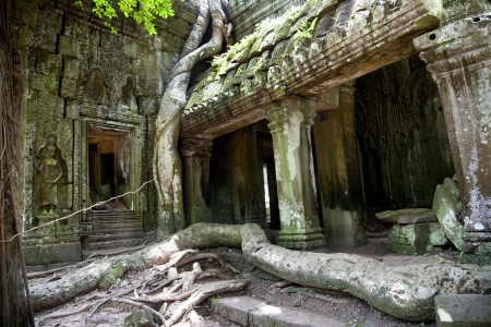 Temples of Angkor  Ta Prohm Stock Photo - 18424860