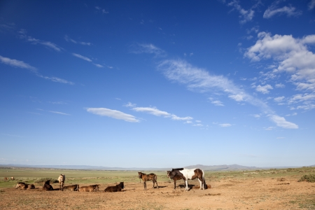 Livestock in the Gobi Desert in Mongolia. A horse is tied on a string