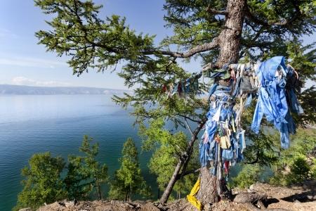 shamanic: shamanic tree with the bottom of Lake Baikal