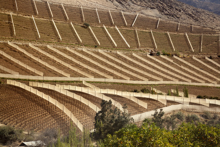 Elqui Valley Vineyards