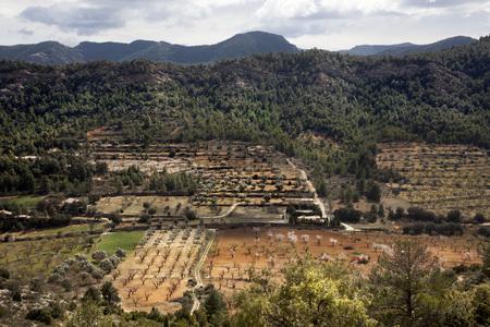Views of Olive tree an Almond tree fields