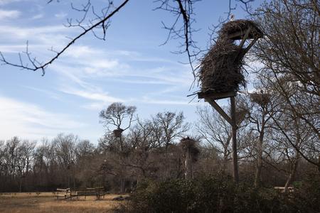 Nest of Storks