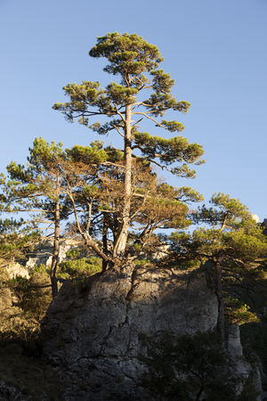 Pine tree in Los Ports mountains natural park Archivio Fotografico - 121839179