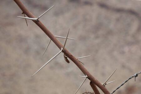 Big Cactus in Elqui Valley