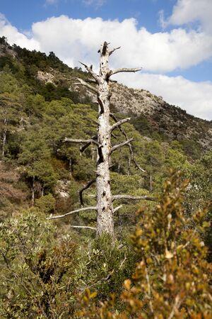 Los Ports Natural Park. Tarragona province. Spain Archivio Fotografico